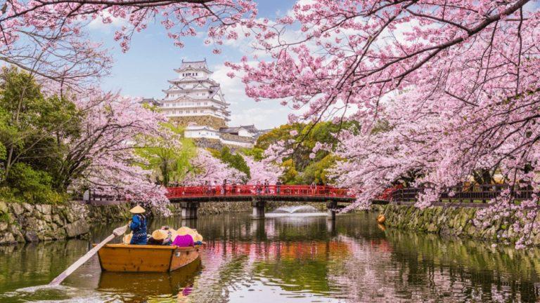 Wisata Sakura Menakjubkan di Jepang